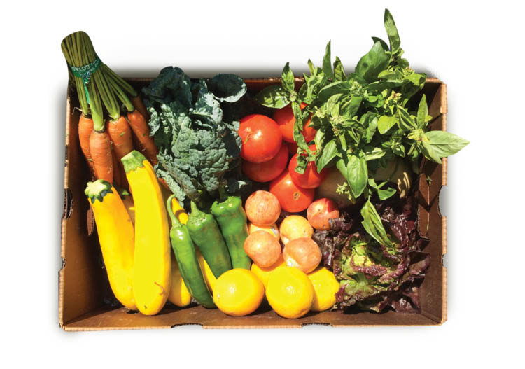 Large Size CSA Produce/Fruit Box