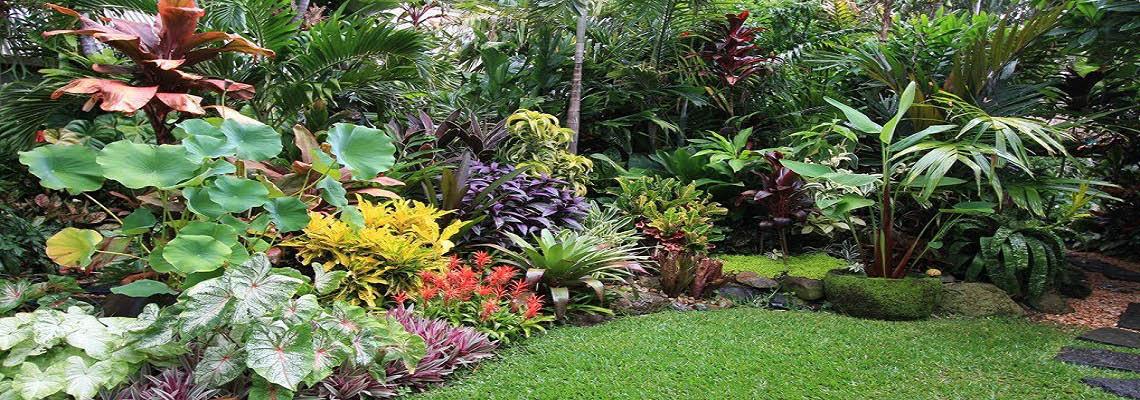 Landscaping, landscapes, garden, trees, yard