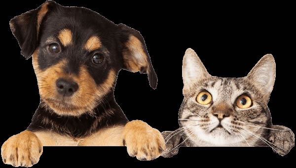 Healthy dog and cat at Veterinary Specialties Hospital at the Lake