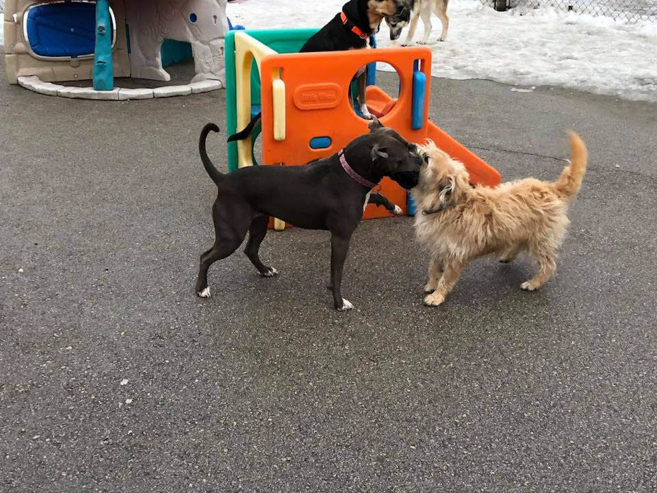 Central Bark Doggy Day Care Franklin