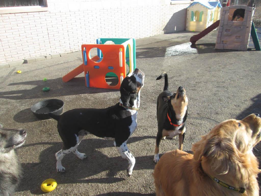 Central Bark Doggy Day Care Franklin Industrial Park