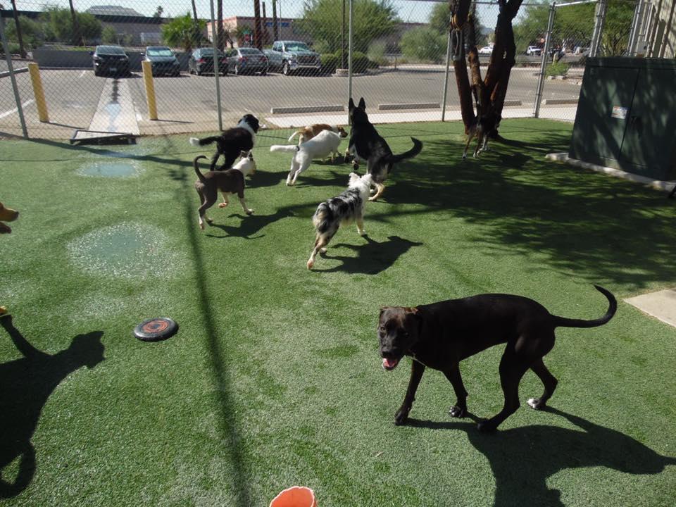 Dog daycare, dog boarding