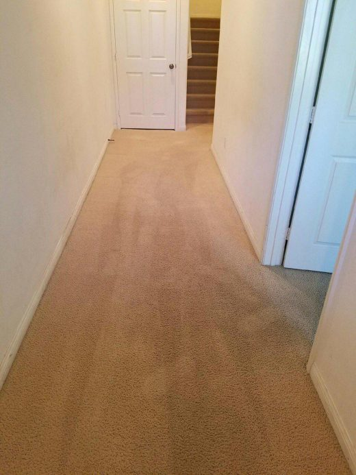 deep cleaned residential carpets; rug cleaning