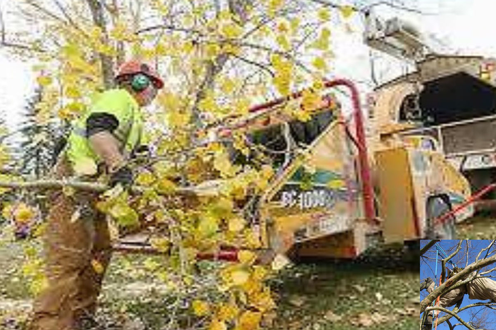 Certified Tree Experts on site chipping
