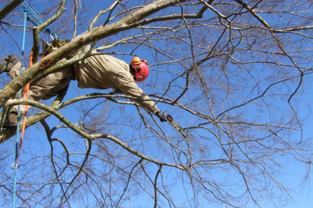 Certified Tree Experts limb removal