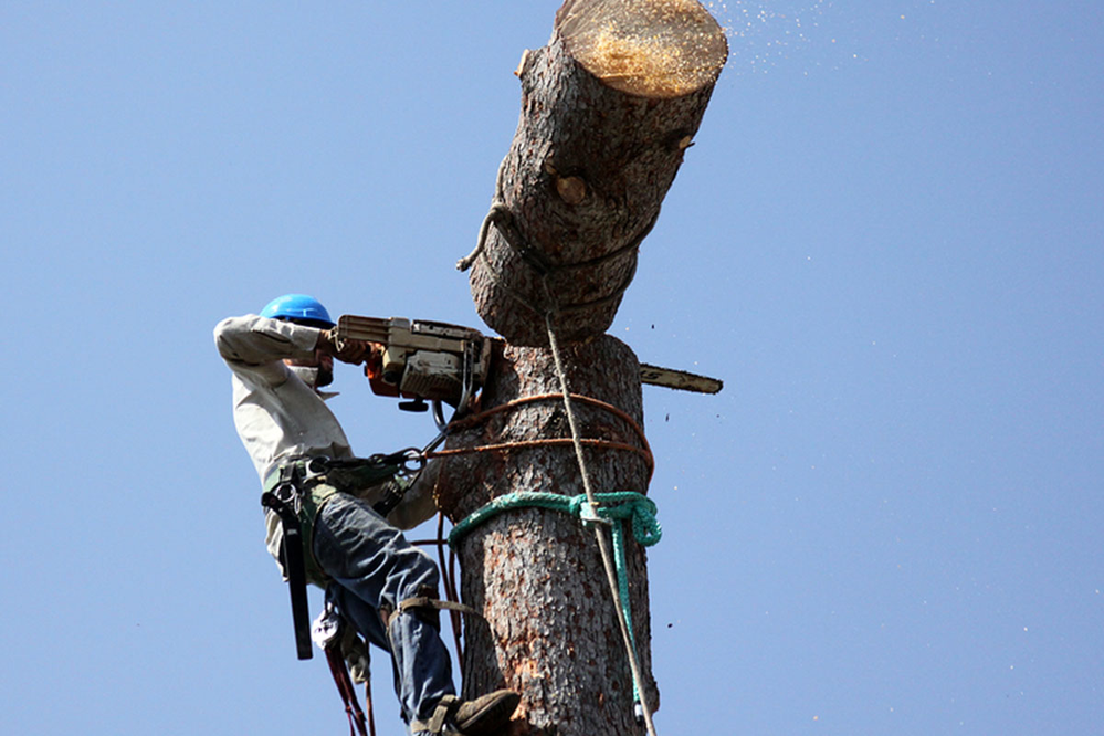 Certified Tree Experts stump removal