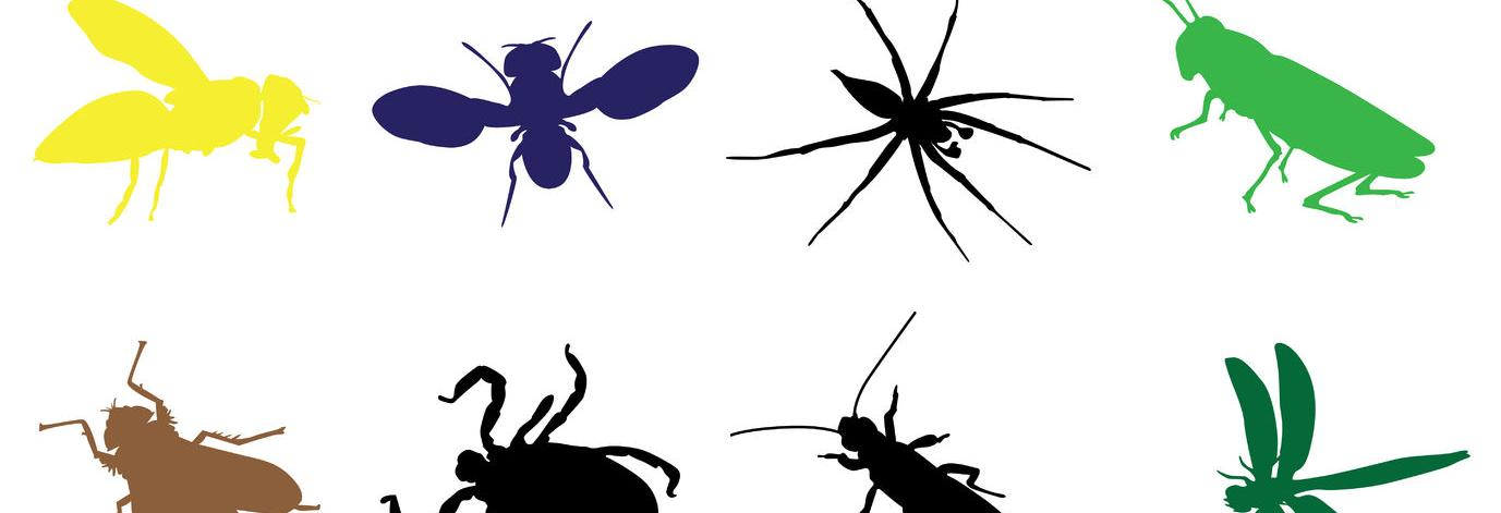 bugs, pests, exterminate, pest control, spiders, rats