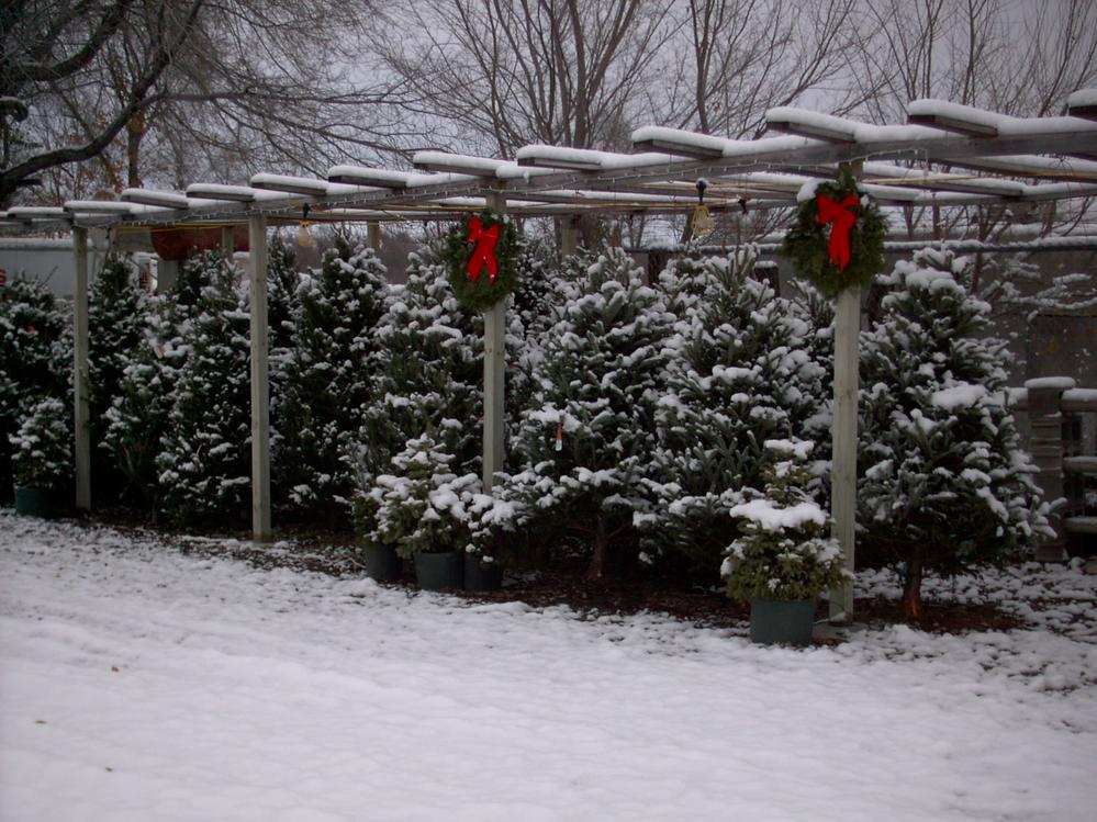 Christmas Tree farm near Omaha