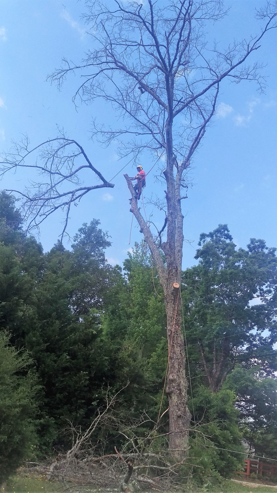 All American Tree Service  tree trimming
