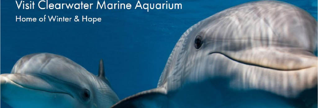 Clearwater marine aquarium coupons