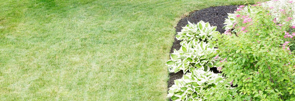 Country Meadow Tree & Landscaping Service banner milford, ct