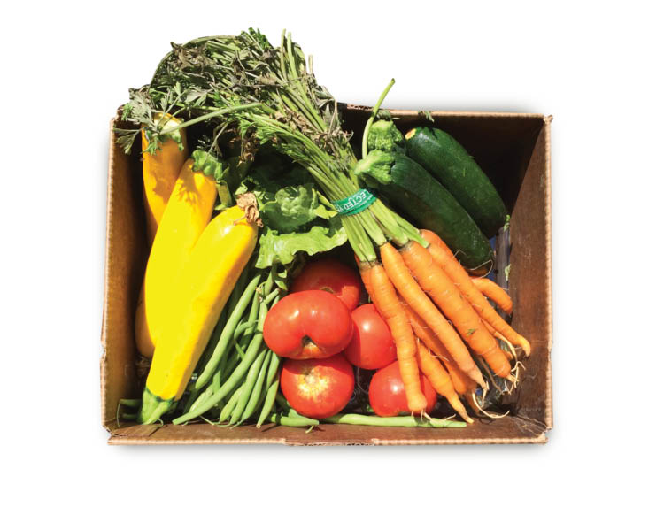 Mini Size CSA Vegetable Box