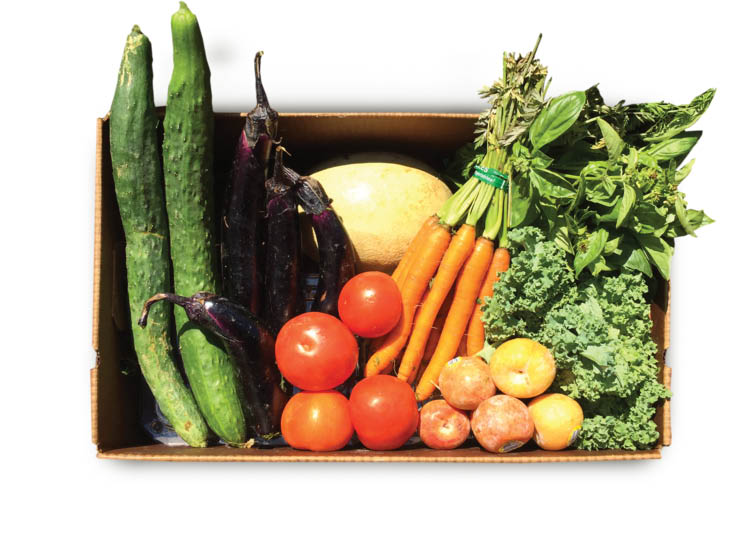 Small Size CSA Produce/Fruit Box