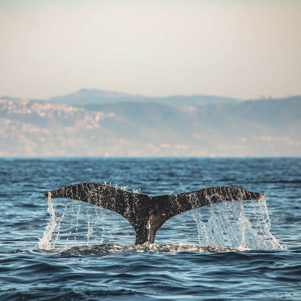 whale watching coupons near me