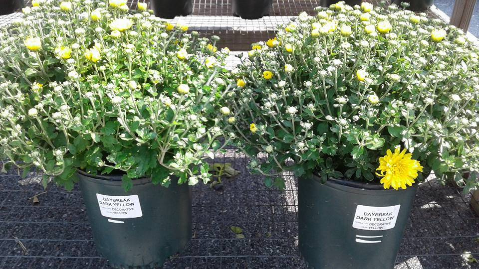 Potted plants and gardening supplies close to Lower Allen, PA