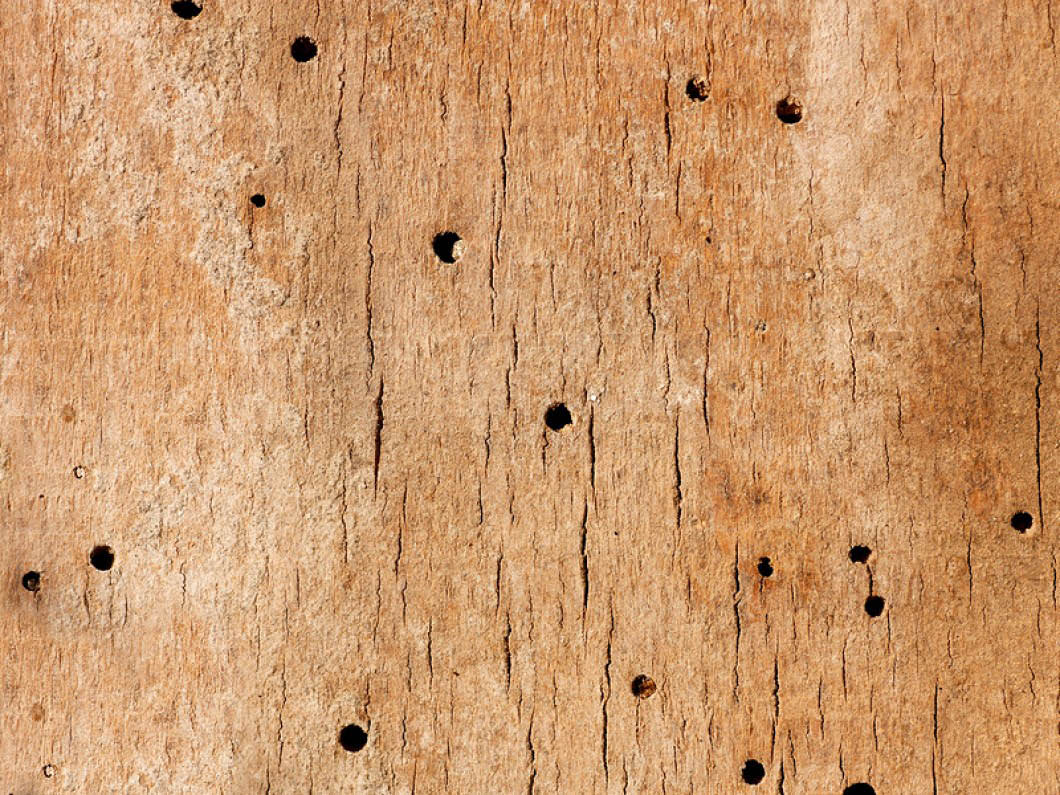 Prevent termites by having your home inspected once a year.