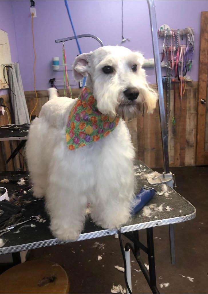 nail trimming, haircut, tick flea treatment, dog walking, bath glad expression