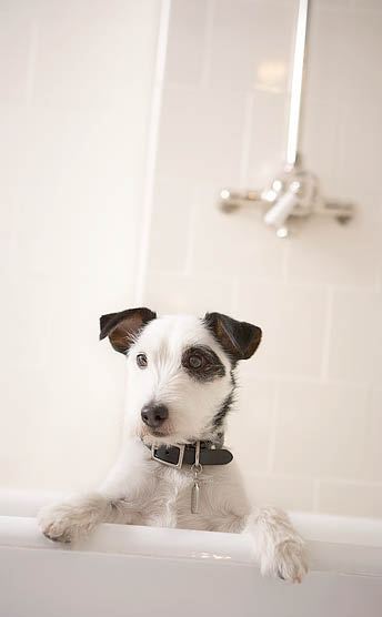 Professional pet grooming coupons in Tomball, TX