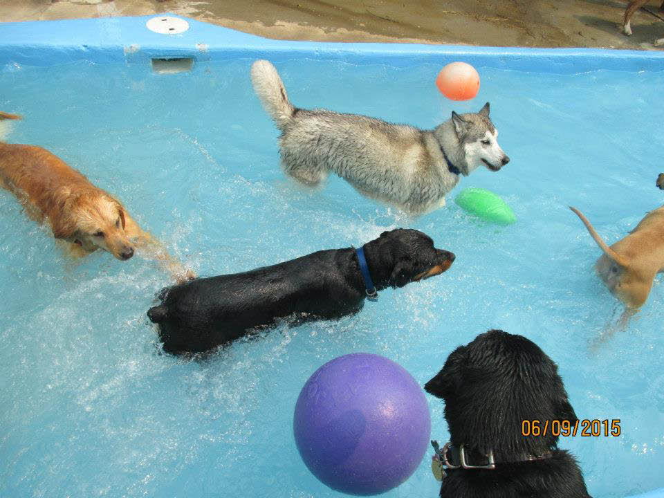 Your dog can enjoy the water and swim in the indoor dog pool