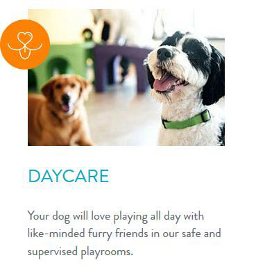 Dogs in our indoor play area