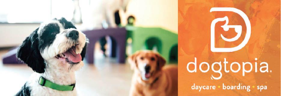 dogtopia dog boarding santa ana ca dog boarding in orange county