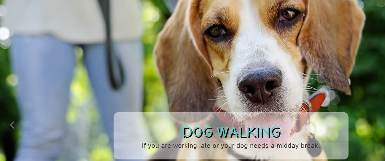 PLATINUM PET SITTING dog walking photo