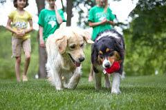 Dog training near Bellevue, NE