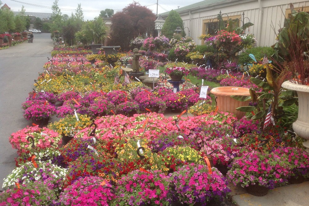 Oakland Nurseries Dublin flower baskets.
