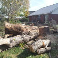 Tree removal services by Earth & Arbor Tree Service-Oklahoma City, OK