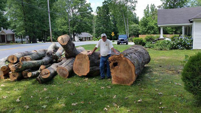tree service in powder springs, ga