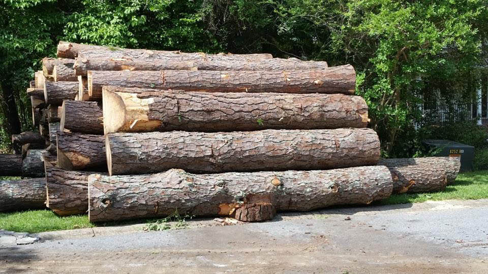 tree cutting for all tree sizes in powder springs, ga
