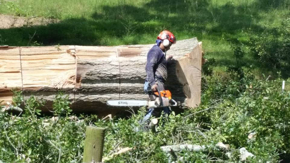 Cutting, trimming, pruning and removing trees in powder springs, ga