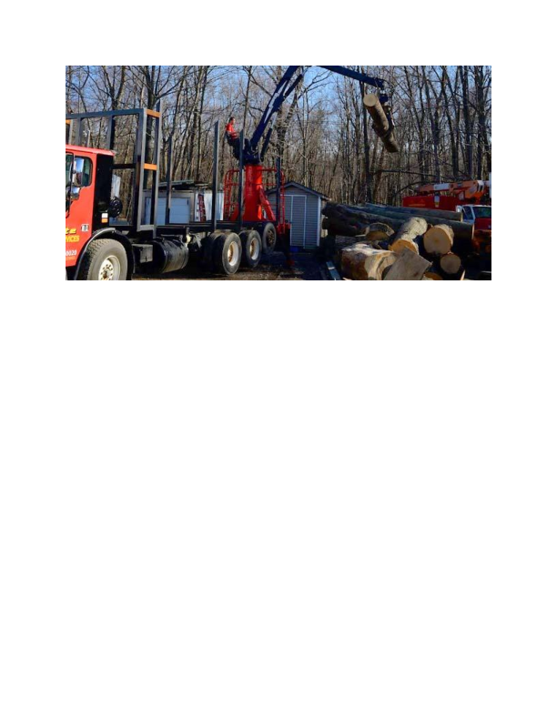 Lot Clearing from Elite Tree Services in Kenvil NJ