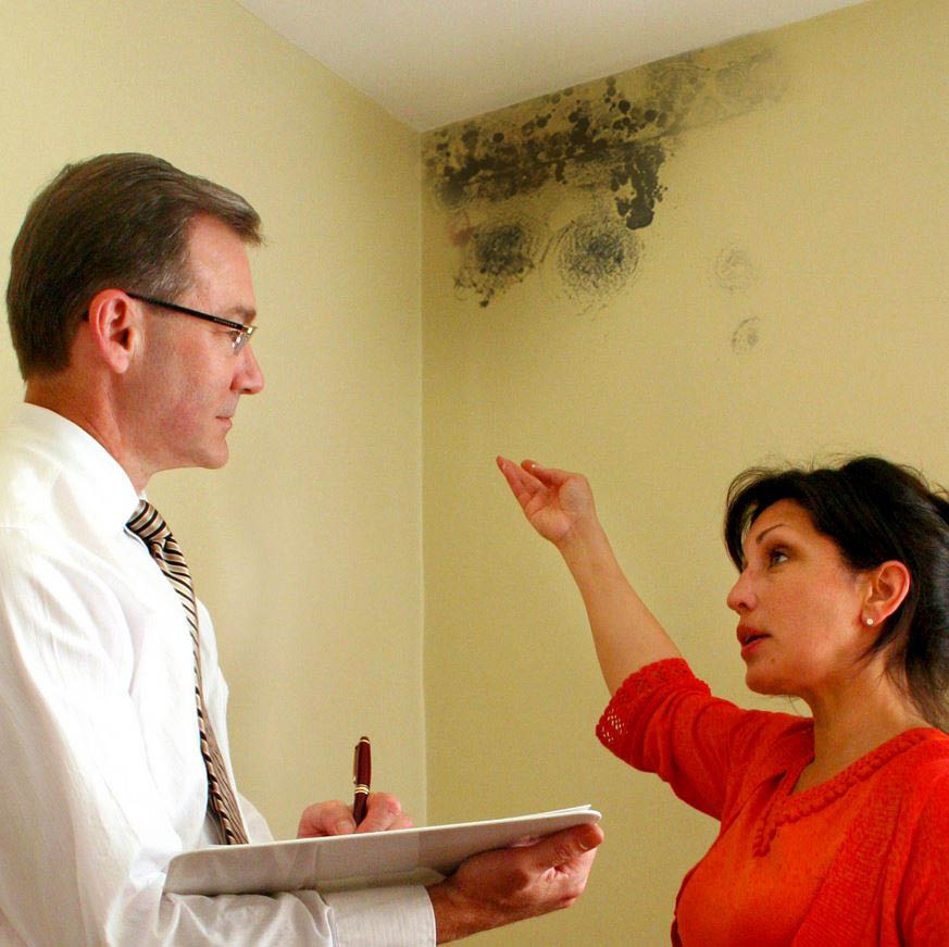 get mold remediation in Riverside, CA