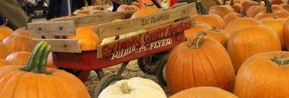enchanted country pumpkin patch brea ca pumpkin patch coupons near me
