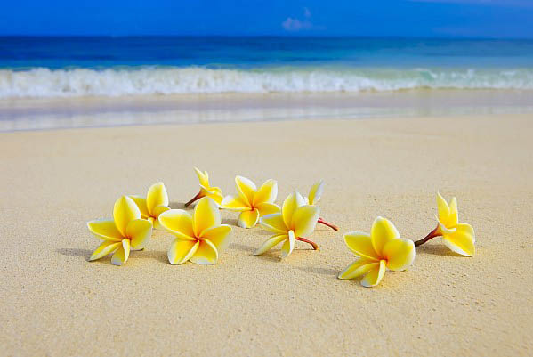 Exotic Tans of Littleton CO Beach ocean flowers