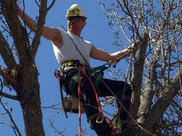 Expert Tree tree Removal COUPON  Rochester NY