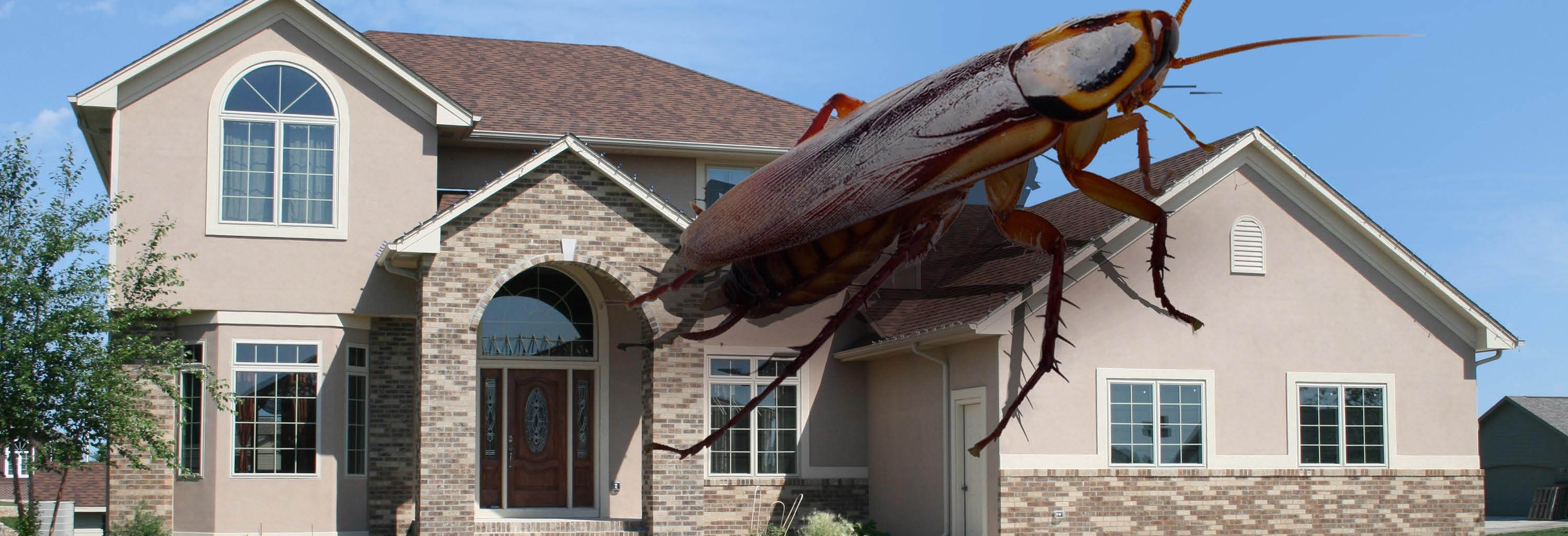 exterminetics of southern california pest control southern california