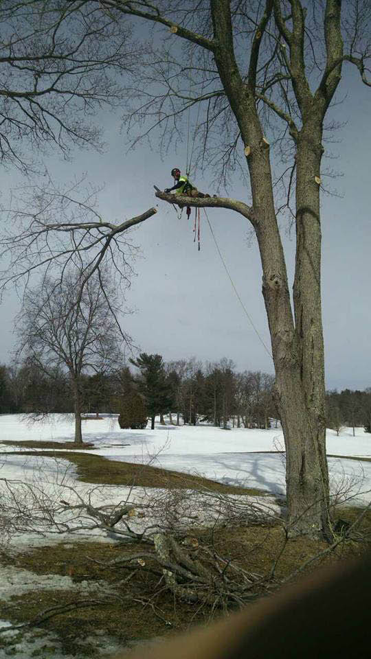 Low hanging or broken limb removal services