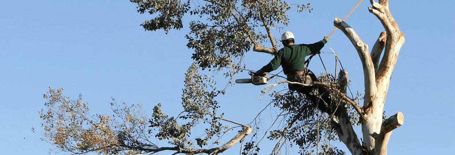 Call a professional from Extreme Tree for tree removal services banner