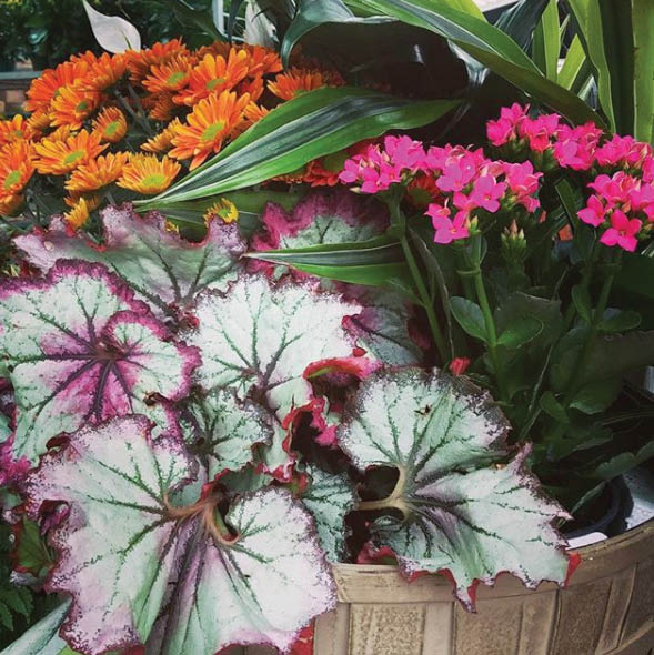Fall florals at Green Valley in Anoka