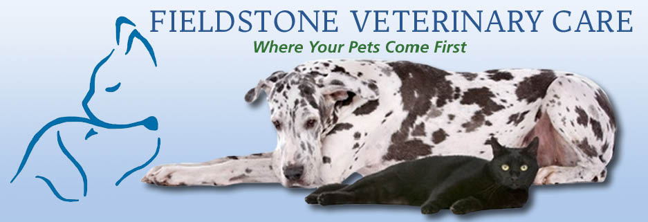 Fieldstone Veterinary Care in New Fairfield, CT Banner Ad