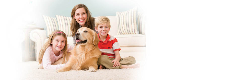 Fresh Step Carpet Cleaning in Brentwood, CA  banner ad