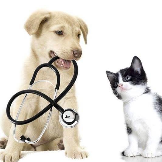 negolas animal care furry friend