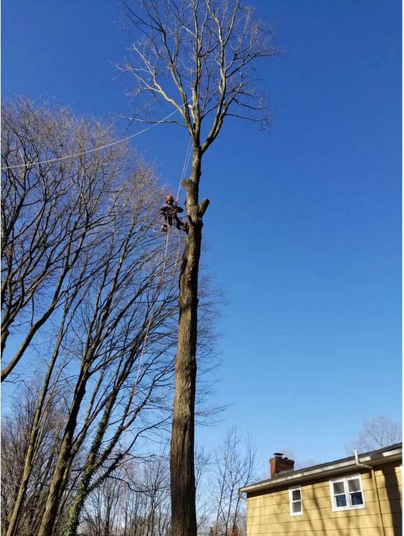Branch Removal by High Quality Tree Service near Dover, NJ
