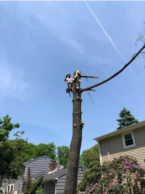 Professional Tree Takedown by High Quality Tree Service near Dover, NJ