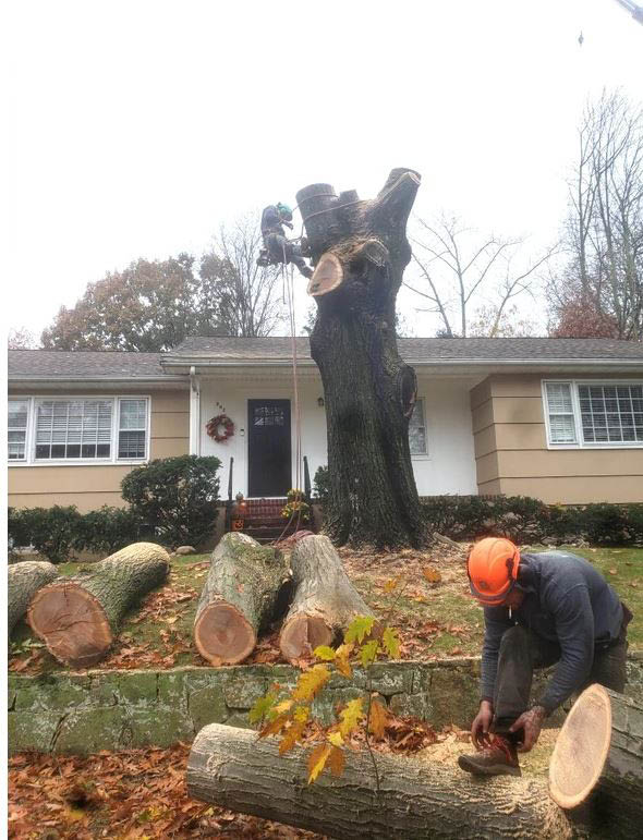 Tree Removal by High Quality Tree Service near Dover, NJ