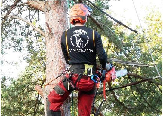 Tree Diagnosis by High Quality Tree Service near Dover, NJ