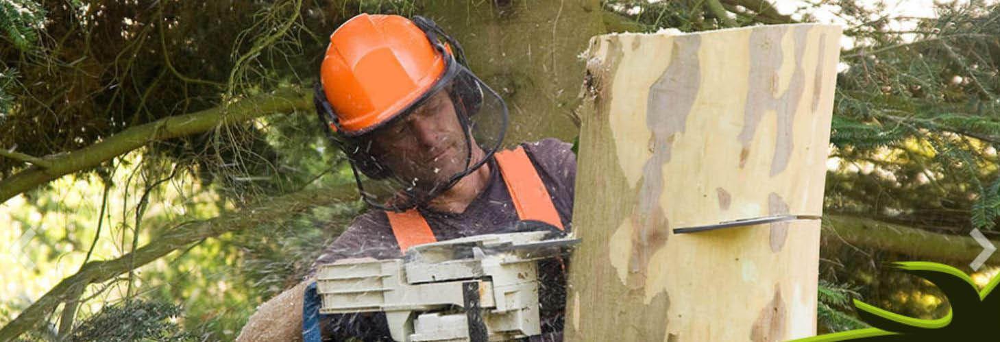 gallo tree service,tree service in newark de,tree maintenance,discounts,tree trimming