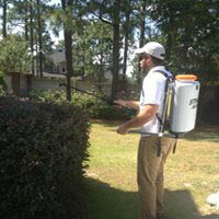Quality pest control spraying services for your family's protection